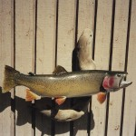 Cuthroat Trout Taxidermy