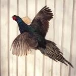 Mutant Pheasant